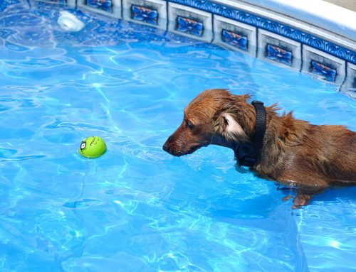 Is it Safe for Dogs to Swim in Chlorine?