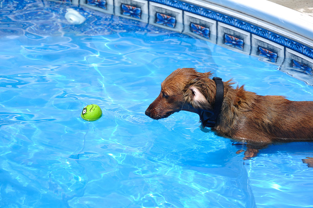 Swimming pool safe for dogs